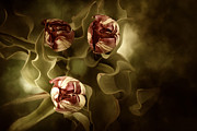 Digital Mixed Media - Tulips in the Mist II by Reflective Moments  Photography and Digital Art Images