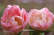 Anne Gordon - Tulips in the Morning