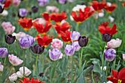 Ivan Slosar - Tulips