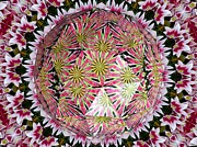 Avant Garde Photograph Posters - Tulips Kaleidoscope Under Polyhedron Glass Poster by Rose Santuci-Sofranko