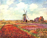 Old Mills Paintings - Tulips of Holland by Claude Monet