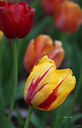 Tulips On Fire II Print by Suzanne Gaff