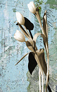 Patina Mixed Media Prints - Tulips on Rustic Blue Script Wall Print by Anahi DeCanio