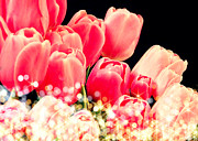 Pictures Buy Photography Digital Art - Tulips Sparkle by Debra  Miller