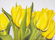 Plumbs Prints - Tulips Print by Teresa Smith