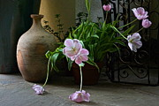Backlit Tulip Photos - Tulips with Earthenware Jar and Wrought Iron by Byron Varvarigos