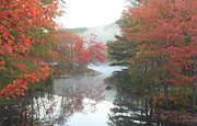Autumn Foliage Prints - Tully River Red Maple Fall Foliage Print by John Burk