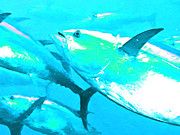 Tuna Metal Prints - Tuna Fish p88 Metal Print by Wingsdomain Art and Photography