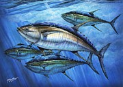 Striped Marlin Framed Prints - Tuna In Advanced Framed Print by Terry Fox