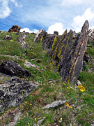 Lichen Pictures Prints - Tundra Rocks Print by Tranquil Light  Photography