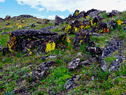 Lichen Pictures Posters - Tundra Yellows Poster by Tranquil Light  Photography