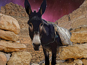 Donkey Digital Art Metal Prints - Tunesian Burro Metal Print by Donna Lee Young