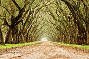 Oak Prints - Tunnel in the Trees Print by Scott Pellegrin