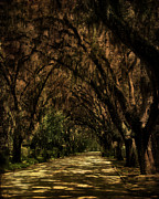 Florida Flowers Prints - Tunnel   Print by Mario Celzner