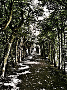 Attraktion Metal Prints - Tunnel of Trees ... Metal Print by Juergen Weiss