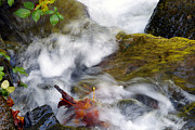 Water In Creek Posters - Turbulent Waters Poster by Sharon  Talson