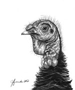 Turkey Drawings Metal Prints - Turkey Bird Metal Print by J Ferwerda