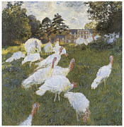 Turkey Painting Metal Prints - Turkeys Metal Print by Claude Monet