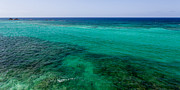 Reef Prints - Turks Turquoise Print by Chad Dutson