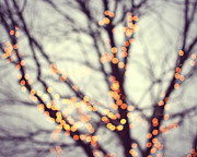 Tree Photograph Prints - Turn Into Stars Print by Lupen  Grainne