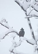 Bird In Snow Prints - Turn Your Back to the Storm Print by Kay Pickens