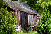 Old Barns Prints - Turn Your Face to the Sun Print by Joan Carroll