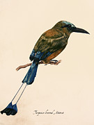 Gouache Paintings - Turquoise-browed Motmot by Rachel Root