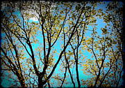Denise Beverly - Turquoise Sky Vivid Tree