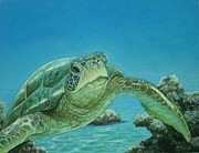 Pravin  Sen - Turtle Between Rocks