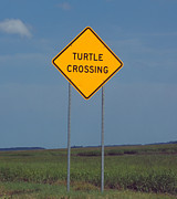 Kim Pate - Turtle Crossing