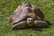 Garry Gay - Turtle