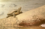 Bask Paintings - Turtle on the branch over lake  by Odon Czintos