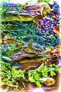 John Haldane - Turtle Pond Fall