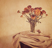 Flower Still Life Photo Posters - Tuscan Blush Poster by Amy Weiss
