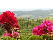 Geraniums Posters - Tuscan Hills and Flowers Poster by Marilyn Dunlap