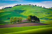 Tuscan Palouse Print by Inge Johnsson