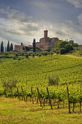 Vineyards Photos - Tuscany - Castello di Poggio alla Mura by Joana Kruse
