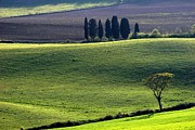 Tuscany Green Hills Print by Arie Arik Chen