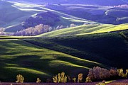 Tuscany Hills Print by Arie Arik Chen