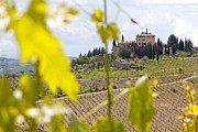 Chianti Vines Prints - Tuscany Mansion Print by Adrian Alford