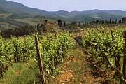 Tuscany Vineyard No.2 Print by Mel Felix