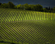 John Pagliuca - Tuscany Vineyard Series 3