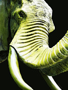 Circus Elephant Posters - Tusk 1 - Dramatic Elephant Head Shot Art Poster by Sharon Cummings