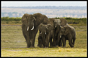 Elephants Digital Art Originals - Tuskar Family. by Vaibhav Jaguste