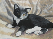 Mammal Pastels Metal Prints - Tuxedo Kitten Metal Print by Jeanne Fischer