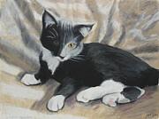 Tuxedo Kitten Print by Jeanne Fischer