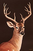 Whitetailed Deer Posters - Twelve Pointer Poster by DiDi Higginbotham