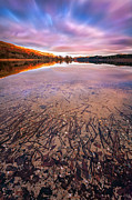 Landscape Photo Posters - Twigs And Leaves  Poster by John Farnan