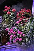 Impatiens Posters - Twilight in the Courtyard Poster by Mary Machare