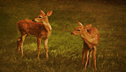 Marilyn Giannuzzi - Twin Fawns